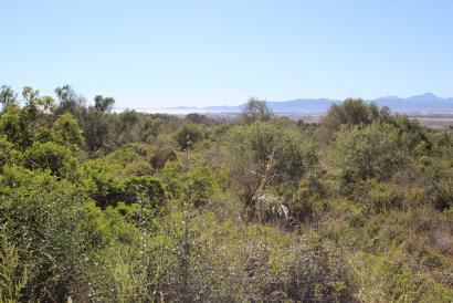 Plot  of land with 7,000 m²  sea views in Son Oliver, Saranjassa, Llucmajor.
